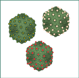 Self-assembly of large capsids: generating synthetic biocompatible nanoparticles that could be functionalized