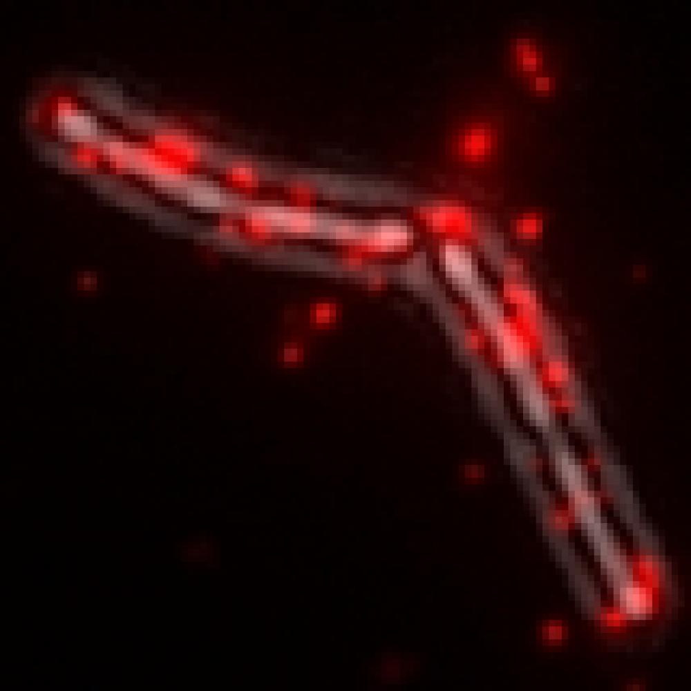 logo theme bacteriiophage infection